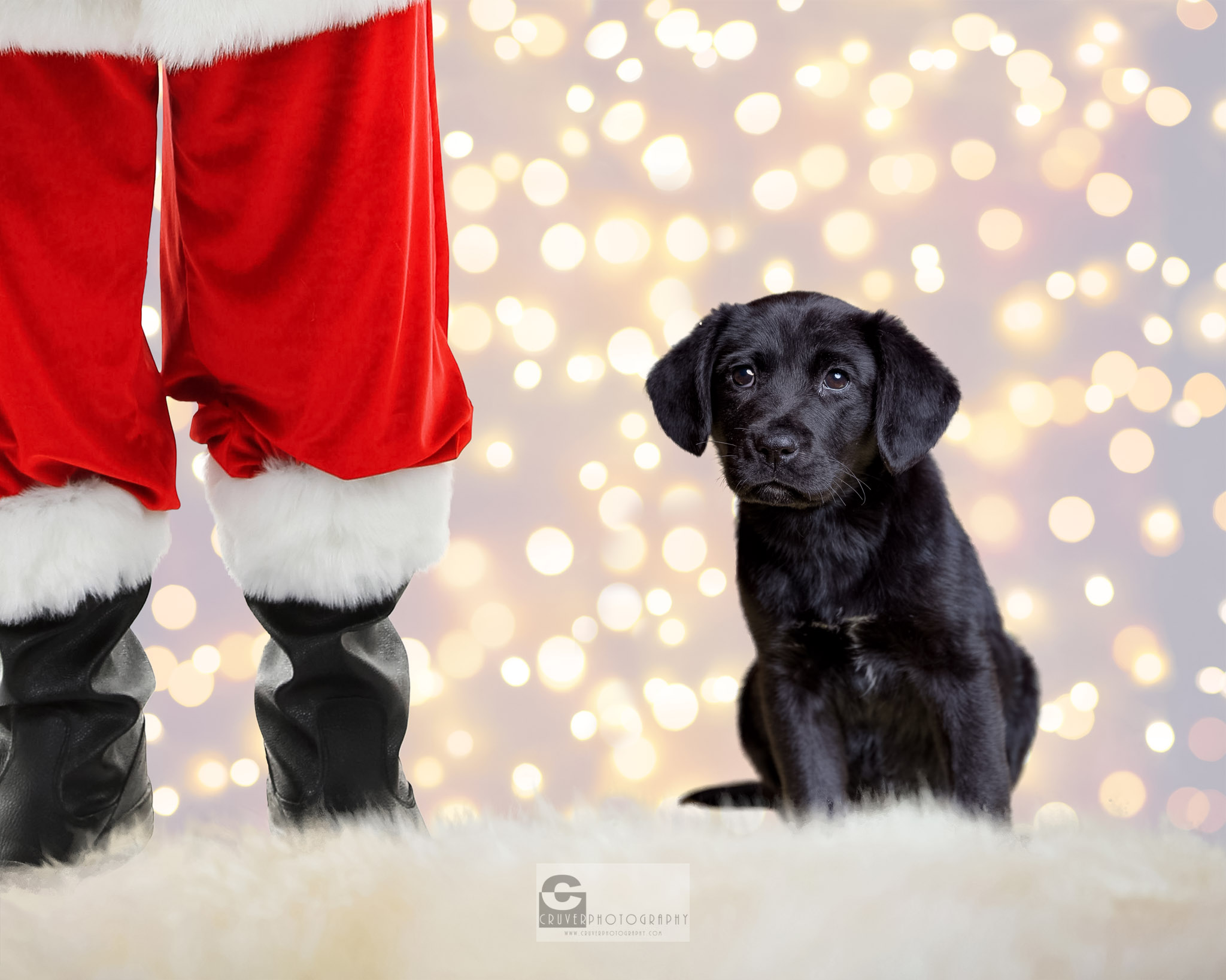 Holiday Pet Rescue Photos - Giving Back - Pet Photography